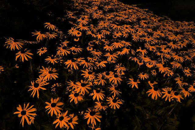 Night time flowers