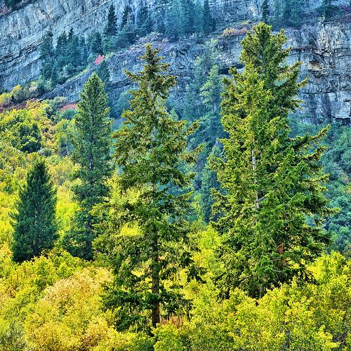 eechillington nikond7500 corelpaintshoppro hiking utah trees mounttimpanogostrail nature