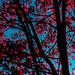 Fall, Takoma Park