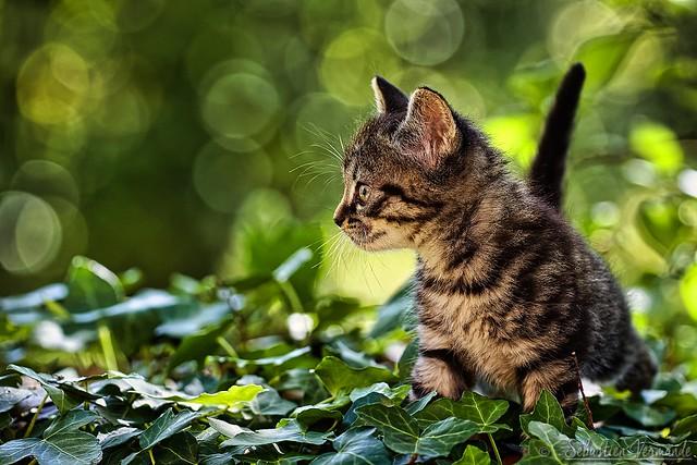 Kitten too cute N°3 - Chaton trop mignon N°3