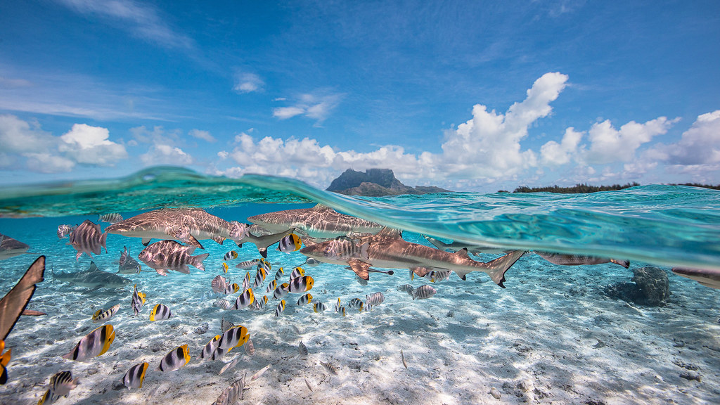 World Shoot Out Underwater Photography Competition