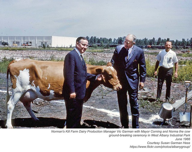 Norman's Kill Farm Dairy Production Manager Vic Garman with Mayor Corning and Norma the cow at the ground-breaking ceremony in West Albany Industrial Park June 1966