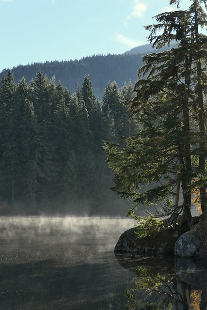Misty icing | Glaçage de brume