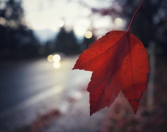 The last leaf ..