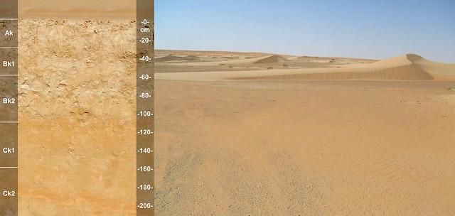 AD103 Typic Haplocalcids UAE