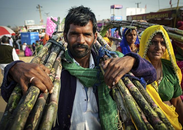 Sugar cane market