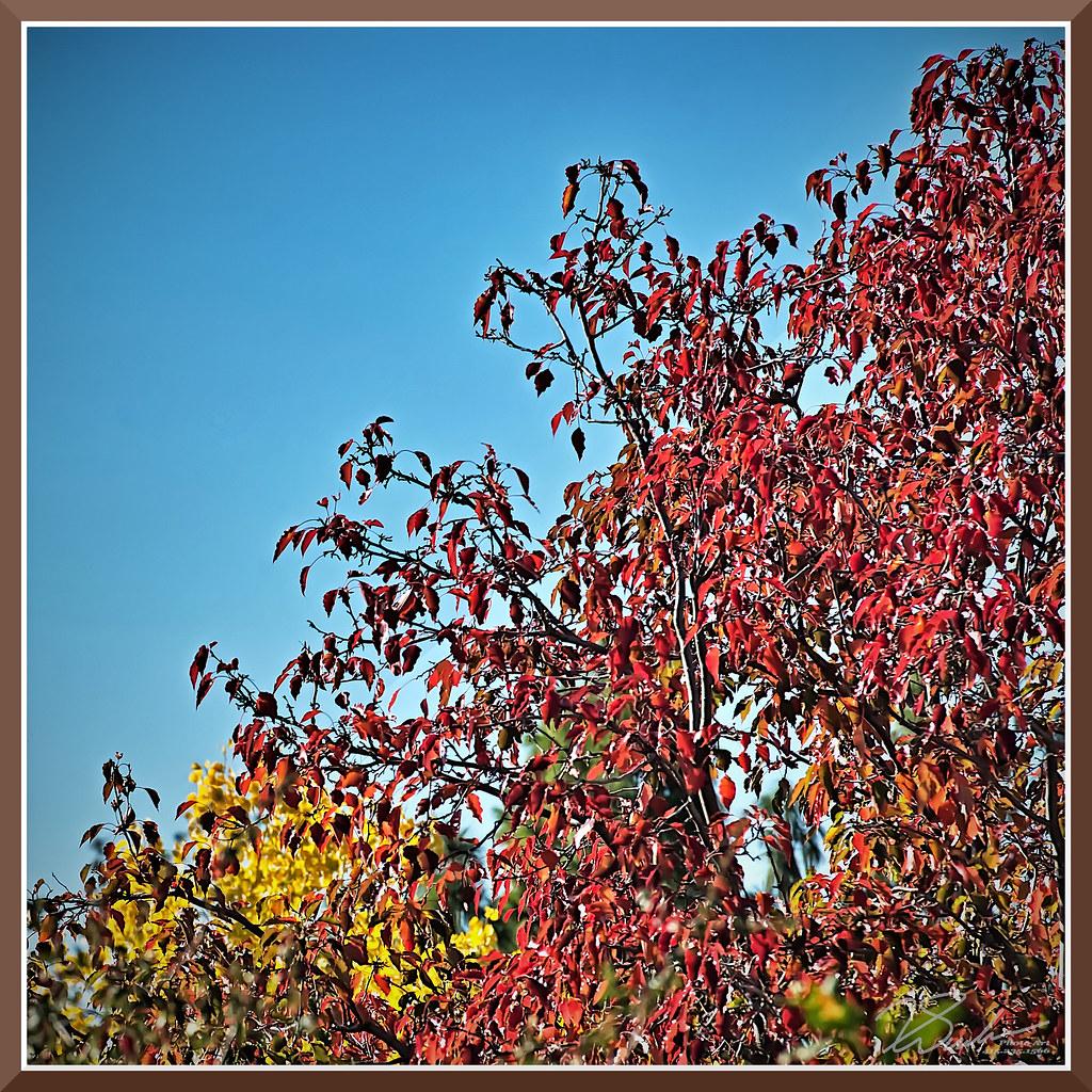 ColorInFolsom_0053 by bjarne.winkler