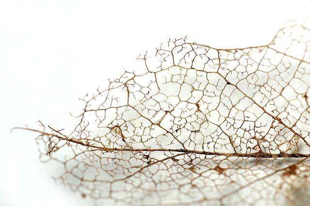 366 - Image 325 - Leaf structure study...