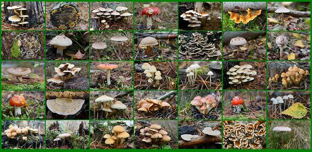 Pilze sammeln mit der Kamera