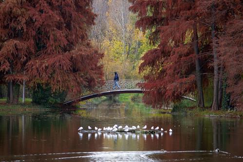 landscape sector4 românia bucurești lake park nature colors outside reflections autumn fall bridge water seagulls