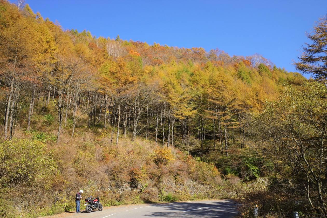 浅間隠山登山口の紅葉風景