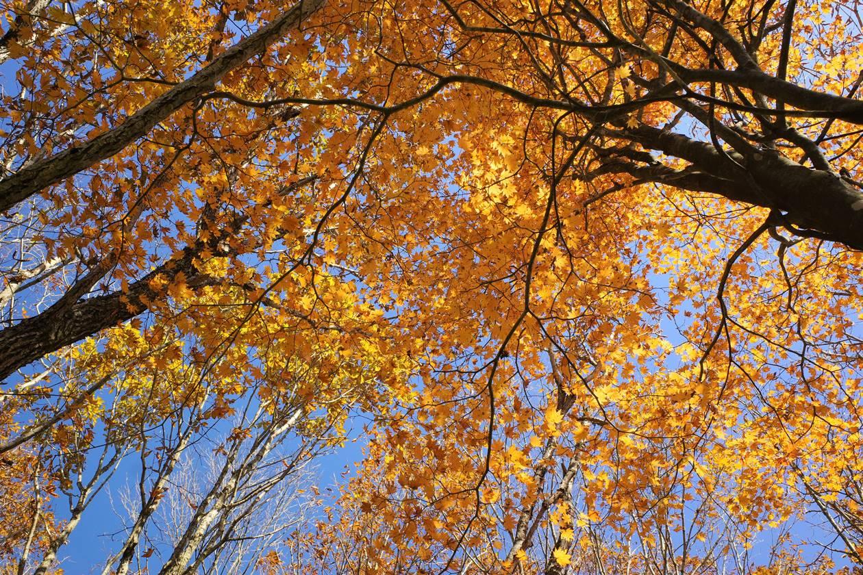 浅間隠山の紅葉