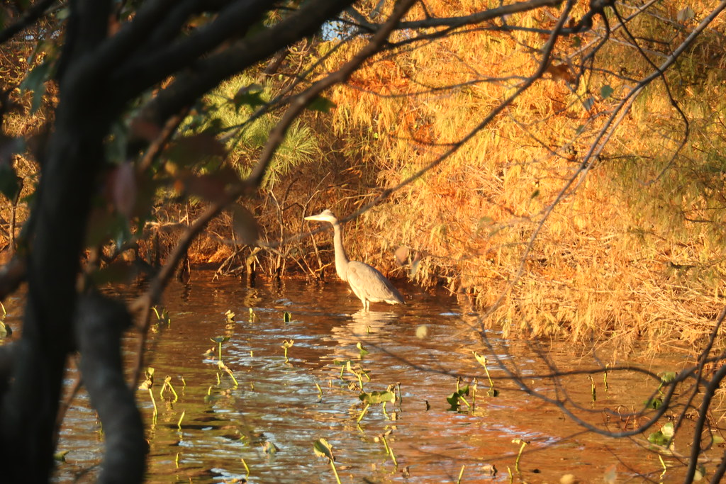 I believe - Norfolk Botanical Garden