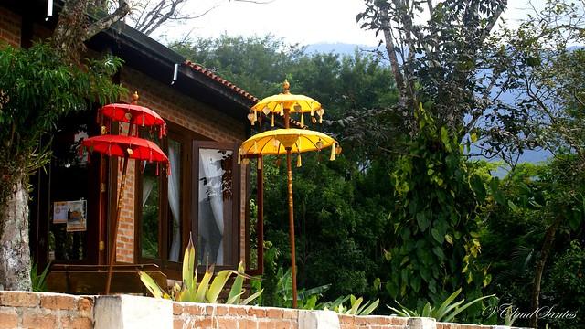 Umbrellas - Sombrinhas