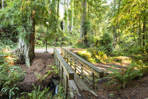 Campus forest | by Humboldt State University