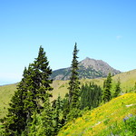 alpine meadow @ Hurricane ridge, Olympic National Park, WA. DSC08063 (1)