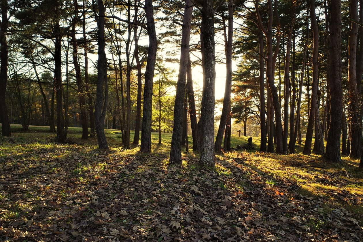浅間牧場ハイキングコース 夕日の木漏れ日