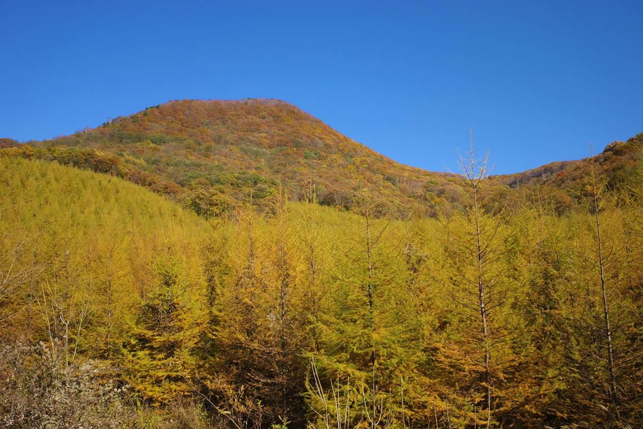 浅間隠山登山 山麓の紅葉