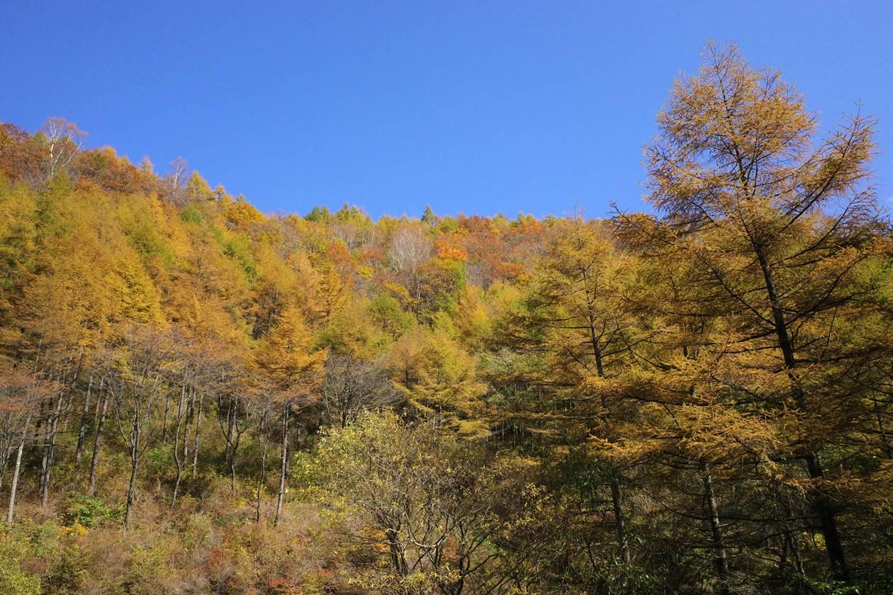 二度上峠の紅葉風景