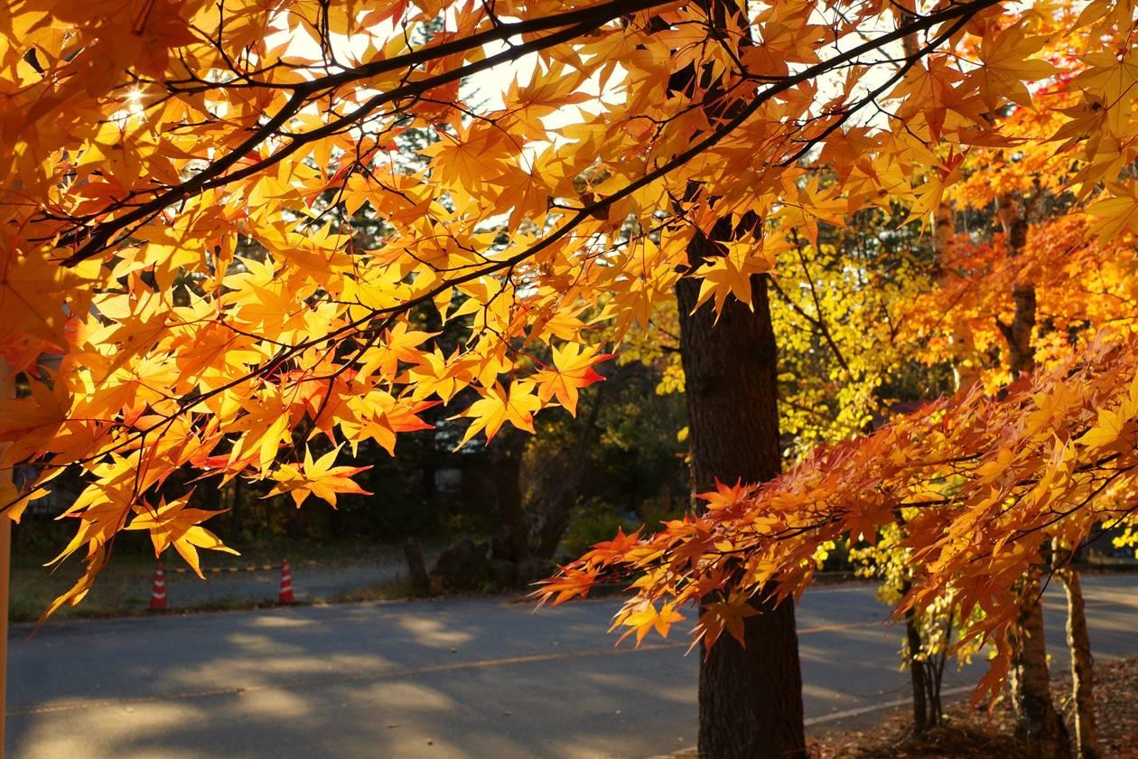 浅間牧場(軽井沢)の紅葉