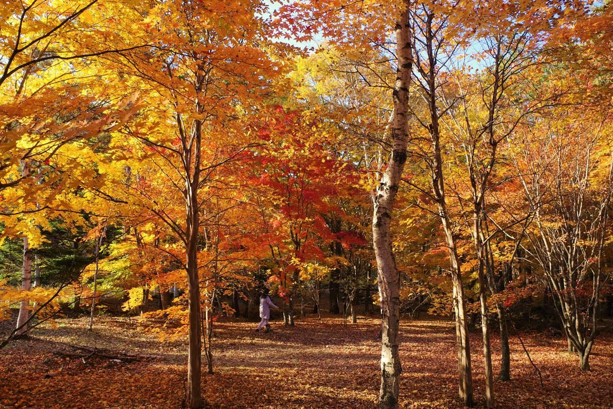 浅間牧場の紅葉