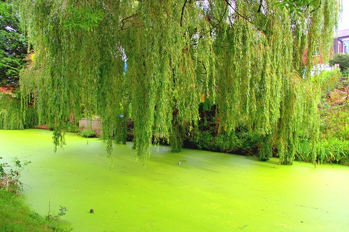 Green willow over green canal | by Tony Worrall