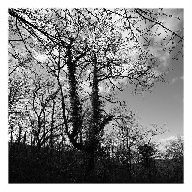Quercy Ghosts #11
