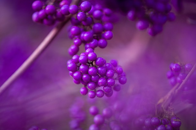 """Purple ... my entry for todays """"Smile on Saturday"""" theme """"Flora in Monochrome"""""""