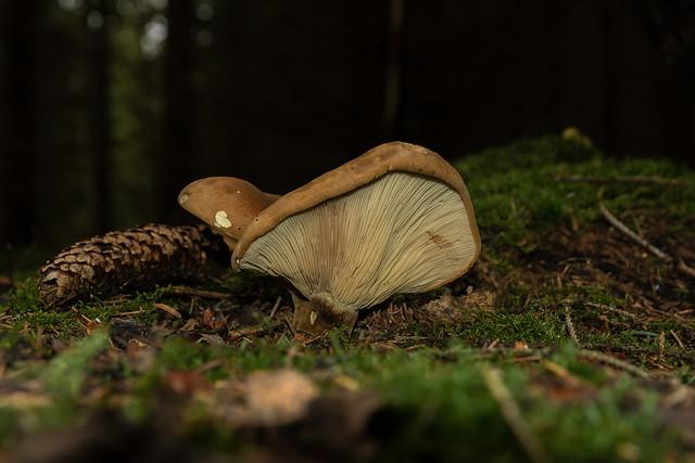Die Welt der Pilze  (74)