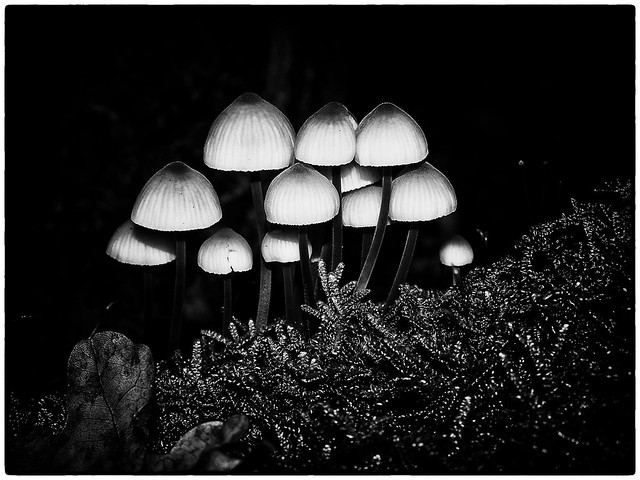 Nature   Black and White #005