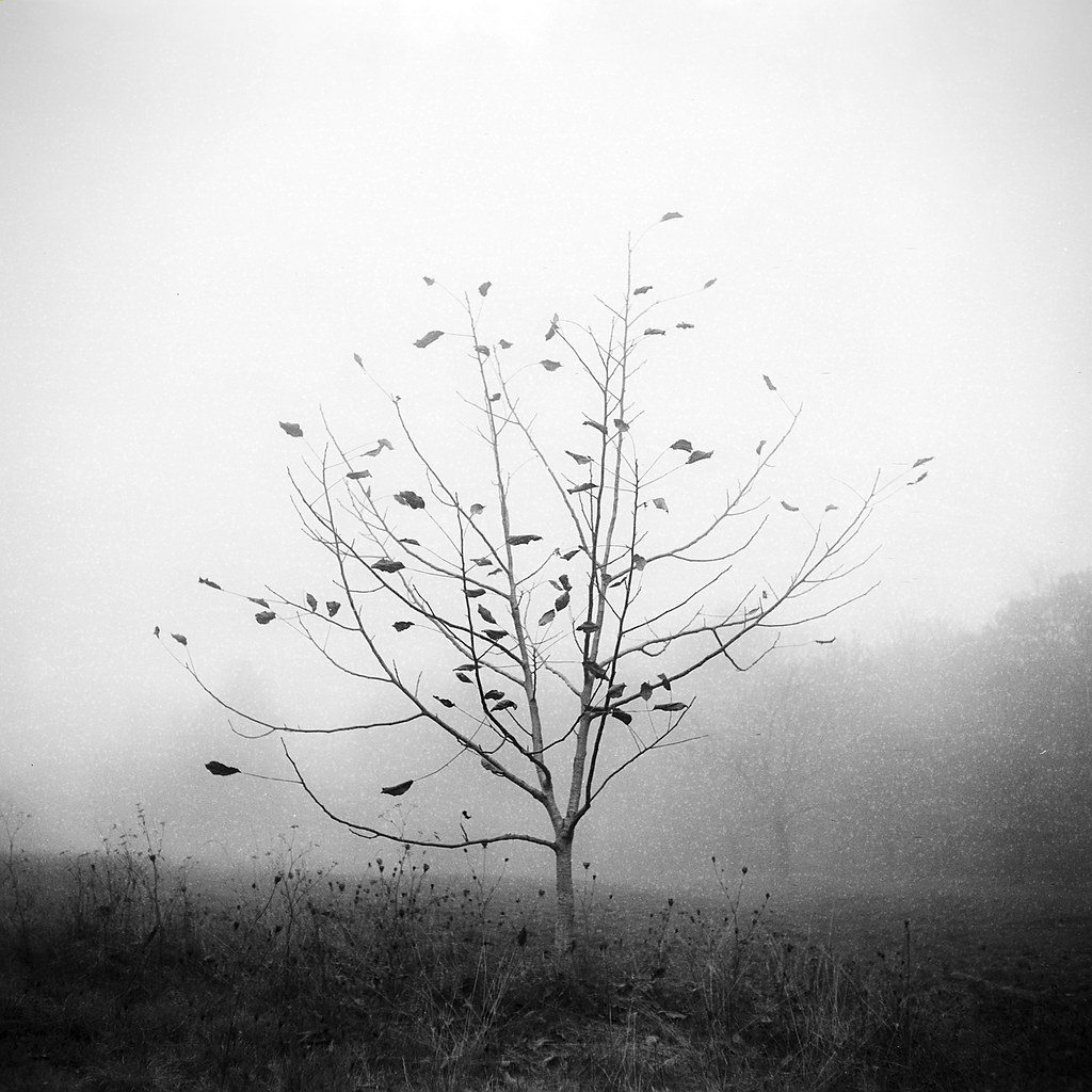 wind&wuthering