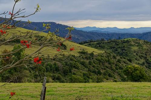 australia queensland erythrina view rural lamingtonnationalpark binnaburra hills dxo