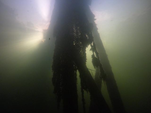 AM 25 Nov 2020 Shore Dive Key Largo