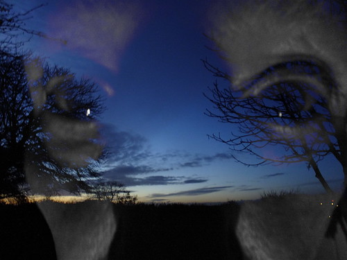 face sunset trees doubleexposure