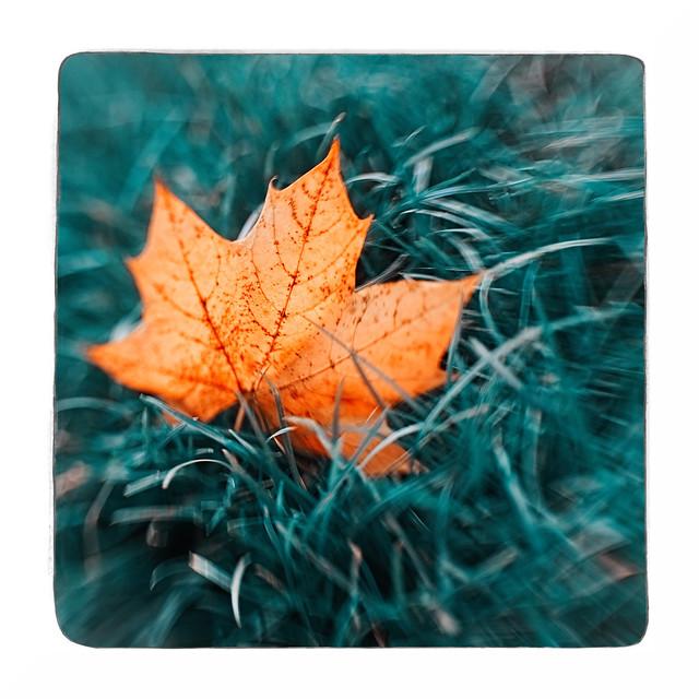 False Colour Autumn