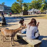 Yo, yo, what's for lunch?, Nara, 20191113