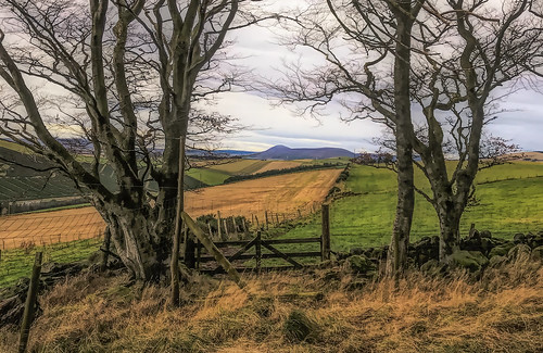 trees gate fields landscape hills scotland aberdeenshire wall dyke rural countryside