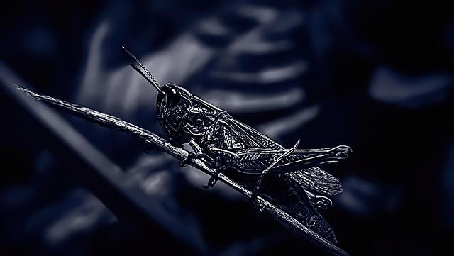 Grasshopper in a Smudge Dress