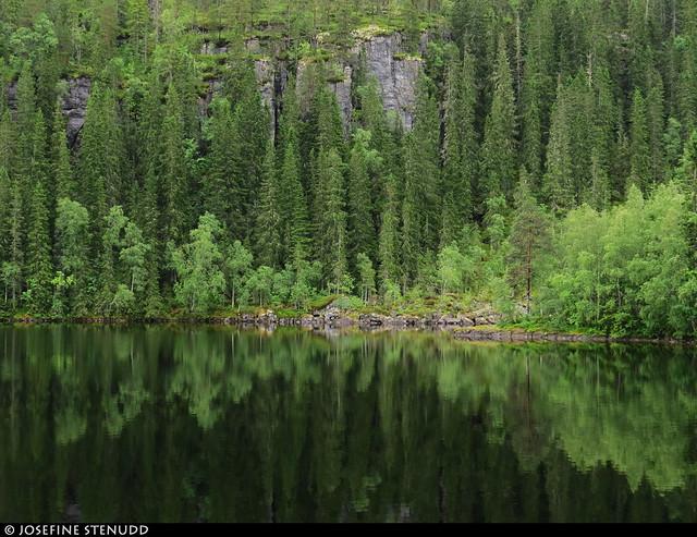 20190629_5 Forest & rocks by shiny lake - Heimsjøen, near Steinkjer, Norway