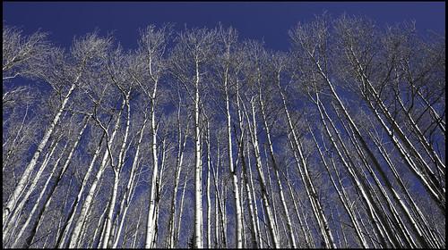 trees sky blue aspentrees santafe nm newmexico trail mountain heald jack nikon d750 travel landscape