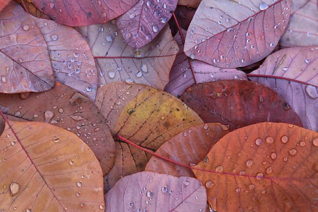Feuilles d'automne // Autumn leaves