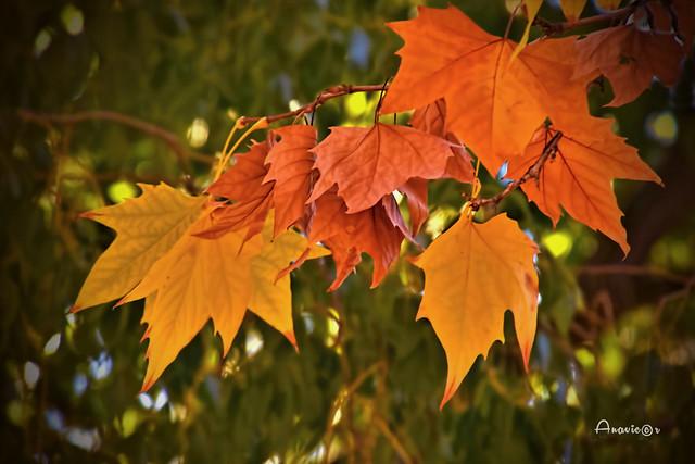 21_Colores de otoño