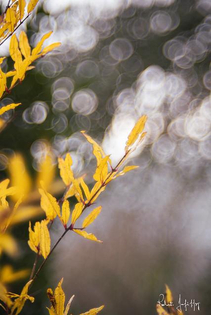 yellow .... ( on Explore )