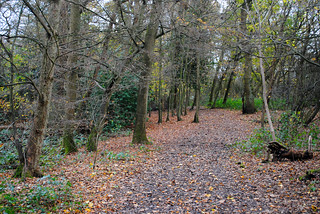 Monken Hadley Common woodland | by zawtowers