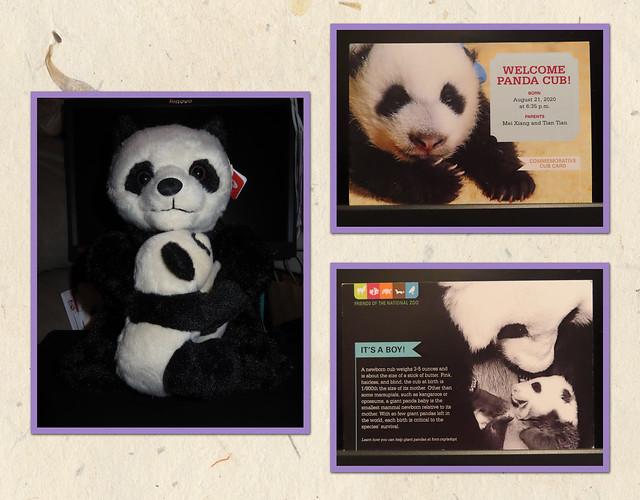 Adopt A Species - Panda Mom and Cub