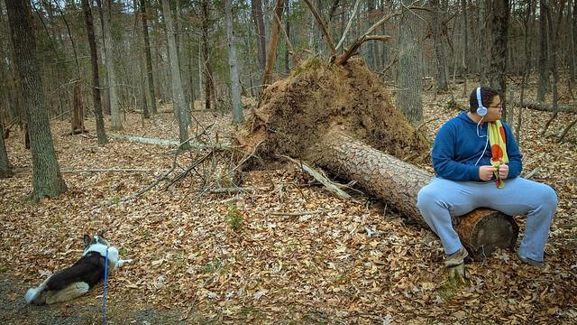 Stump Resting