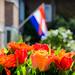 Portfolio: Amsterdam