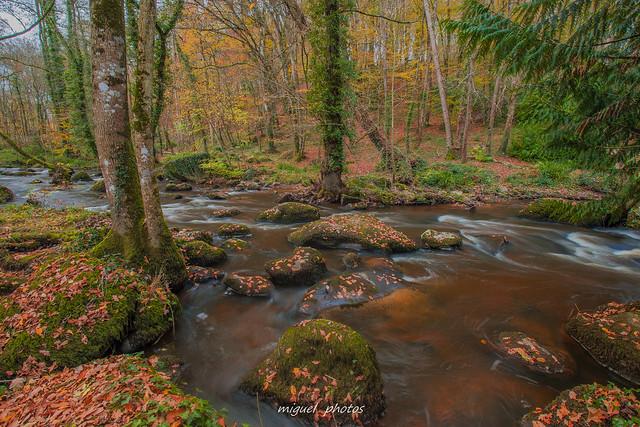 Les belles couleurs d'automne en bord de rance ( 22 Lanrelas , Bretagne )
