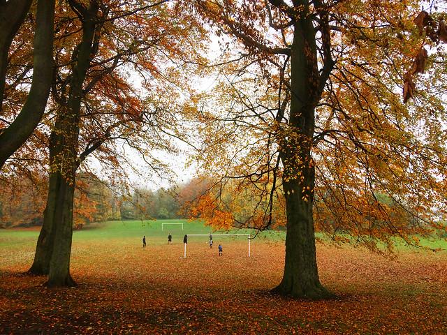 Dame Margarets field, Washington