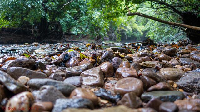 Shallow Depth Of Creek